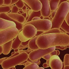 Cellular disruptions and/or dysfunctions occur and allows for disinfection in the targeted area.